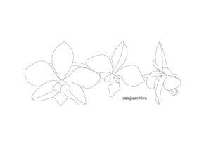 эскиз орхидея