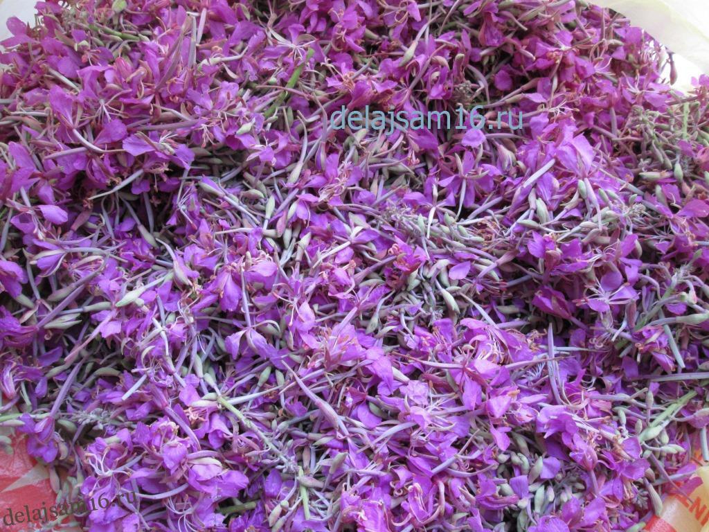 Иван чай цветы или листья